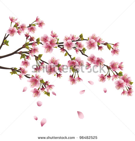Sakura Blossom Japanese Cherry Tree With Flying Petals Clipart