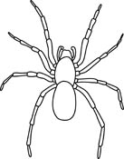 For Arthropod Pictures   Graphics   Illustrations   Clipart   Photos