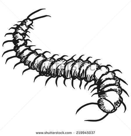 Hand Drawn Sketch Illustration Of Centipede   Stock Vector