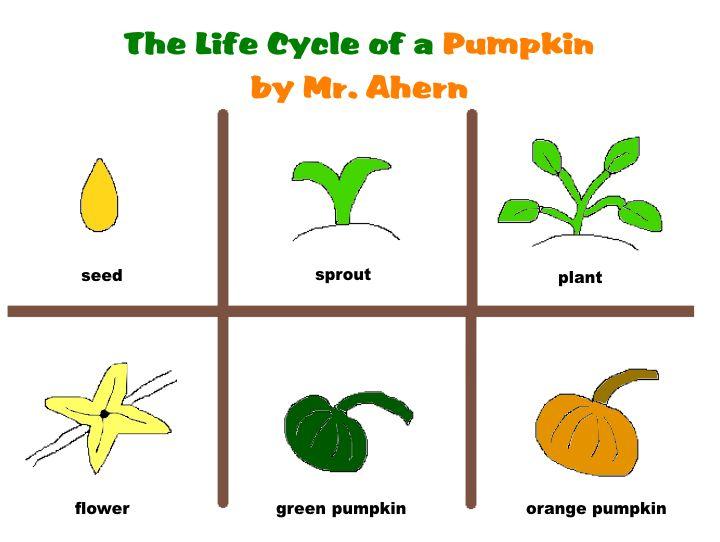 Printables Life Cycle Of A Pumpkin Worksheet pumpkin life cycle worksheet plustheapp clipart kid
