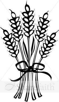 Wheat Tied With Ribbon   Thanksgiving Clipart
