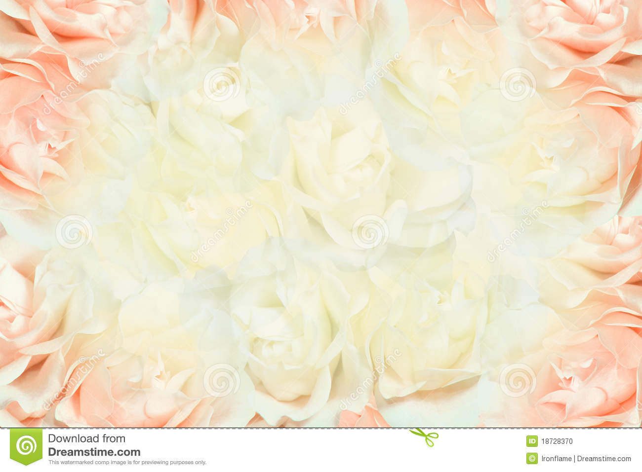 Pink And White Roses Background Stock Photo   Image  18728370