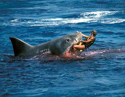 Info Tiger Shark  Tiger Shark Attacks