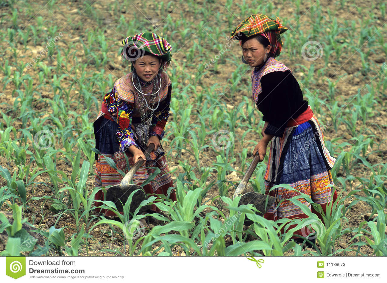 Two Flower Hmong Women Working On The Field Near Bac Ha North Vietnam