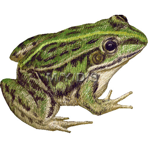 Black Spotted Pond Frog Clipart Picture   Large