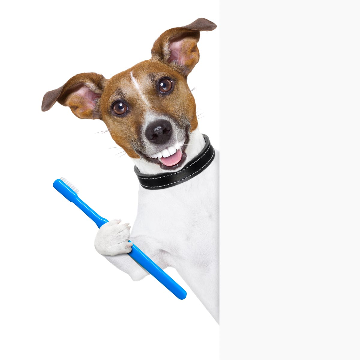 Dog With Toothbrush Dog With Toothbrush