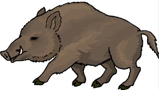 Clip Art Hog Clipart wild hog clipart kid clip art