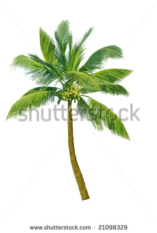 Download This Coconut Tree Clip Art Picture