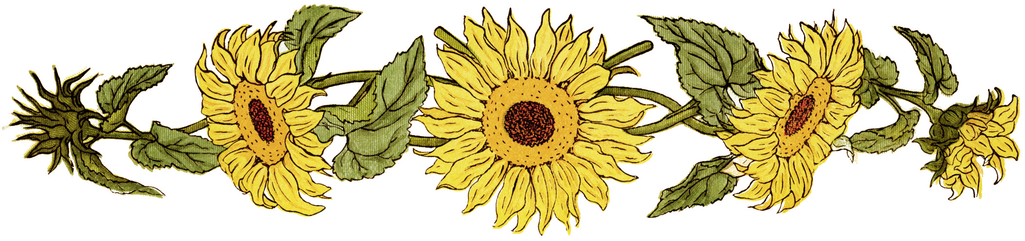 Flower Sunflower Clipart Free Printable Sunflower Sunflower Graphic