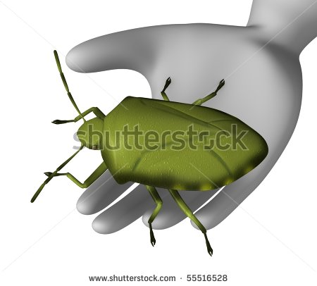 Acrosternum Hilare Stock Photos Images   Pictures   Shutterstock