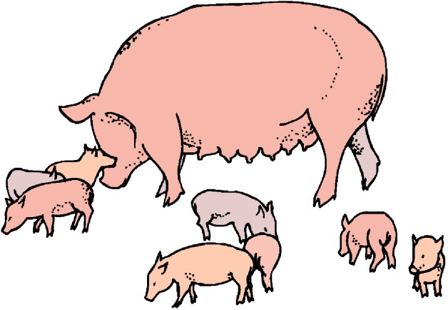 Clip Art Three Pigs Clipart - Clipart Kid