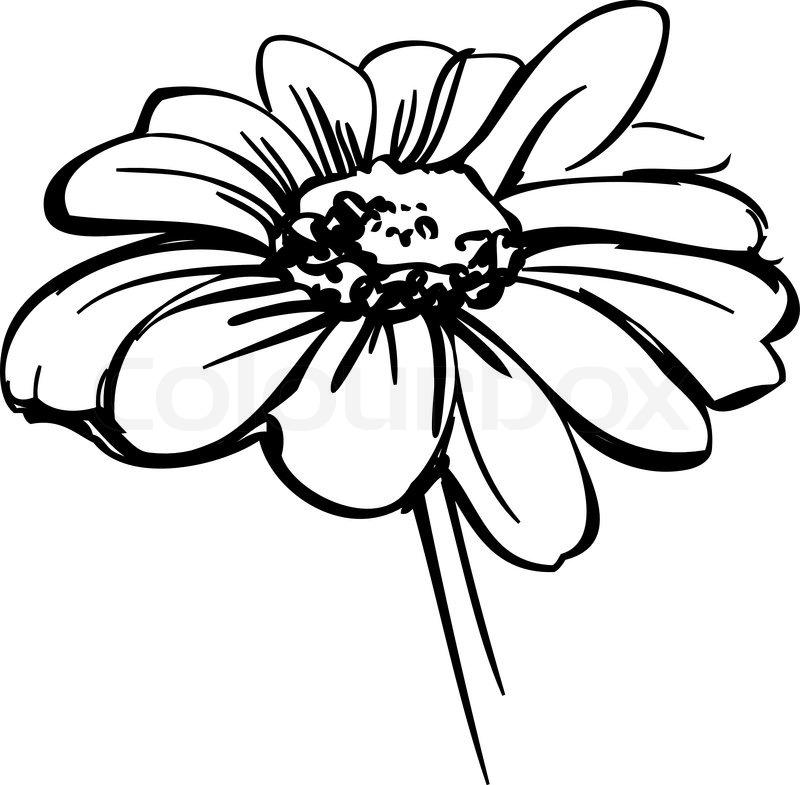 Eine Skizze Wilde Blume Wie Eine Daisy   Stock Vektor   Colourbox
