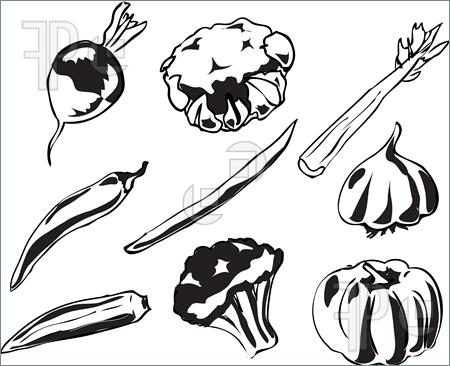 Black And White Illustration Of Vegetables Hand Drawn Look  Turnip