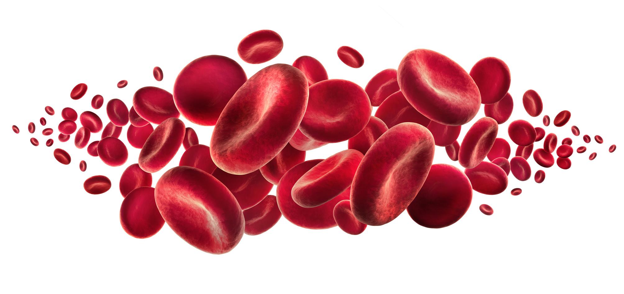 Znalezione obrazy dla zapytania blood cell