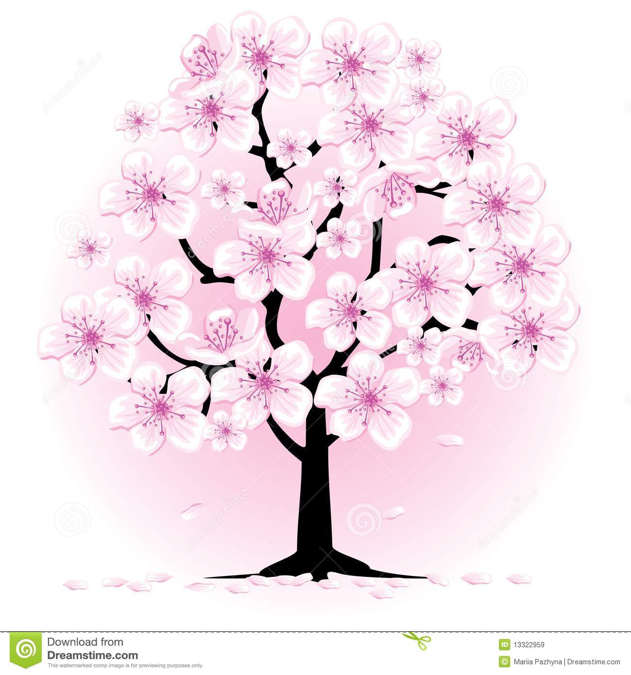 Blossom Cherry Tree Royalty Free Stock Images   Image  13322959