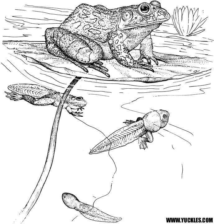reptile coloring pages http www yuckles images reptile coloring pages 2832