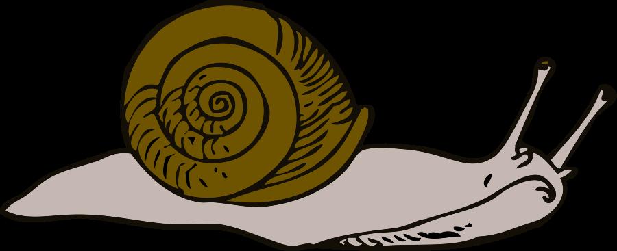 Clip Art Cartoon Snail Clipart - Clipart Kid