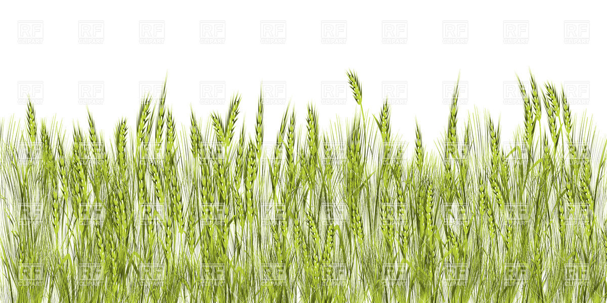 Field Of Green Wheat 16891 Backgrounds Textures Abstract Download