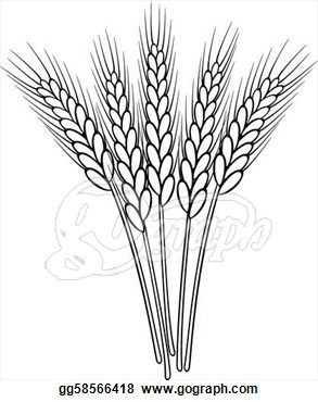 Of Vector Black And White Wheat Ears  Eps Clipart Gg58566418   Gograph