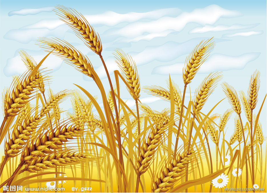 Wheat Clip Art Free Download