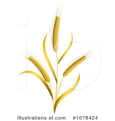 Wheat Clipart  1078424   Illustration By Oligo