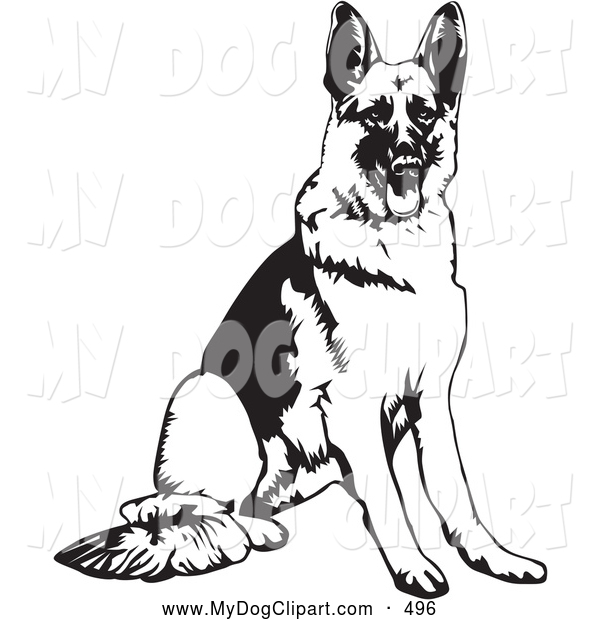 Back   Gallery For   White German Shepherd Clip Art