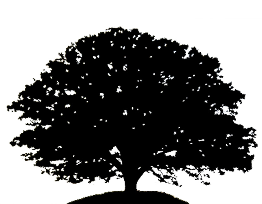 Clip Art Oak Tree Clipart white oak tree clipart kid silhouette 23090834 maple with leaves and grass black