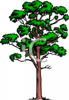 Forest Trees Clip Art Rainforest Trees Clipa...