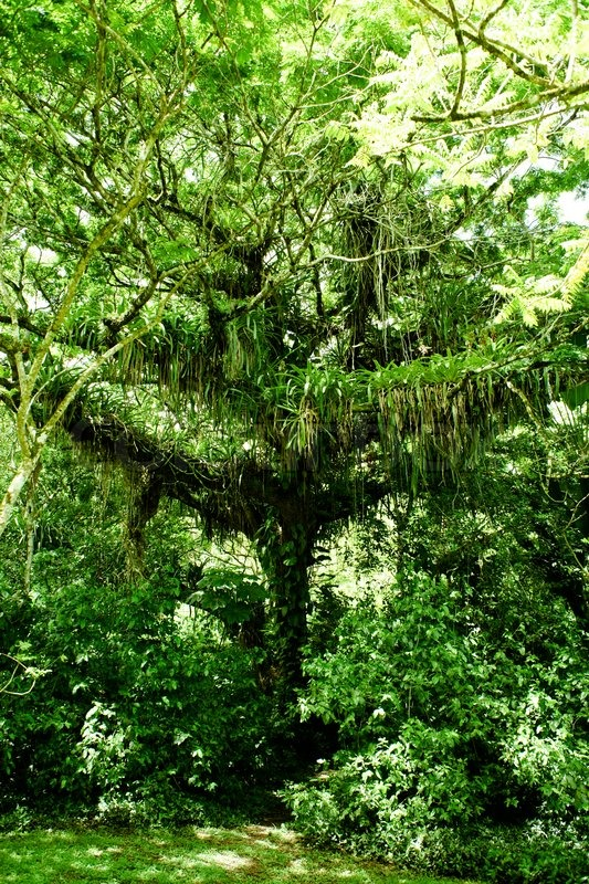 4503782 510066 Big Jungle Tree In A Rainforest Jpg