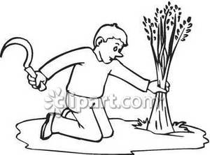 Black And White Drawing Farmer Cutting Wheat With A Scythe Royalty