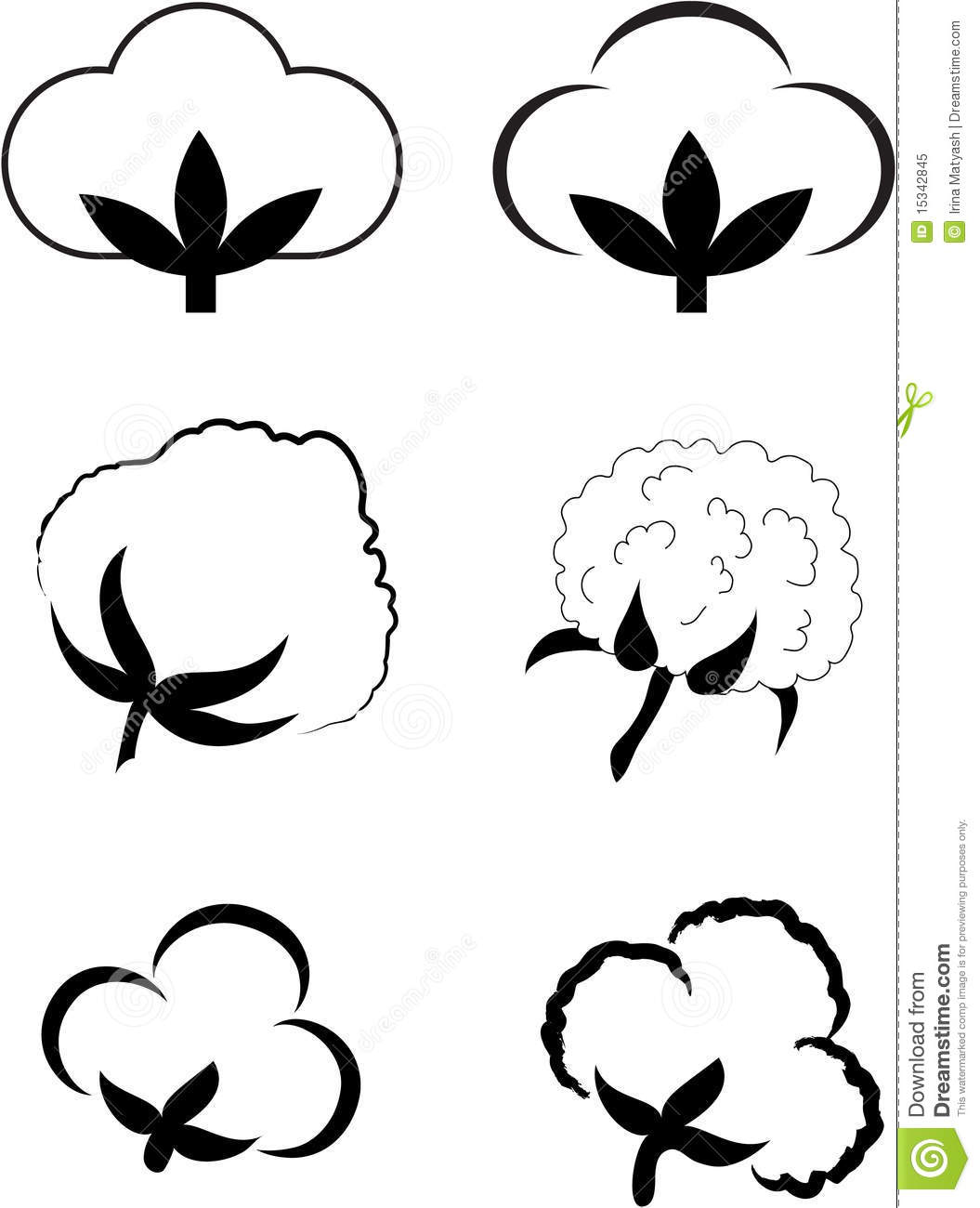 Cotton  Gossypium  Element For Design Vector Illustration
