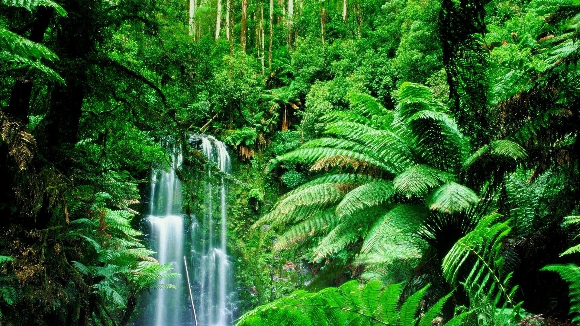 Green Landscapes Trees Jungle Forest Rainforest Wallpaper   1920x1080