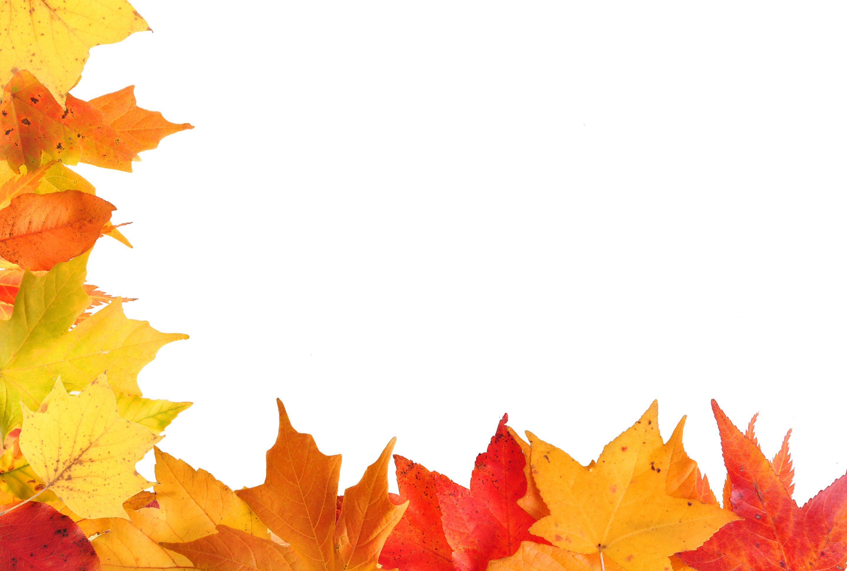 Fall Leaves Border Clipart - Clipart Kid