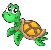 Sea Turtle Illustrations And Clipart