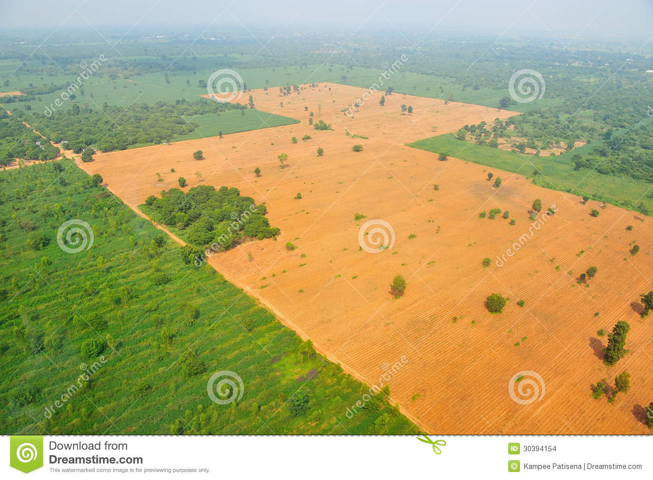 Bird Eye View Of Rice Field In Thailand Stock Images   Image  30394154