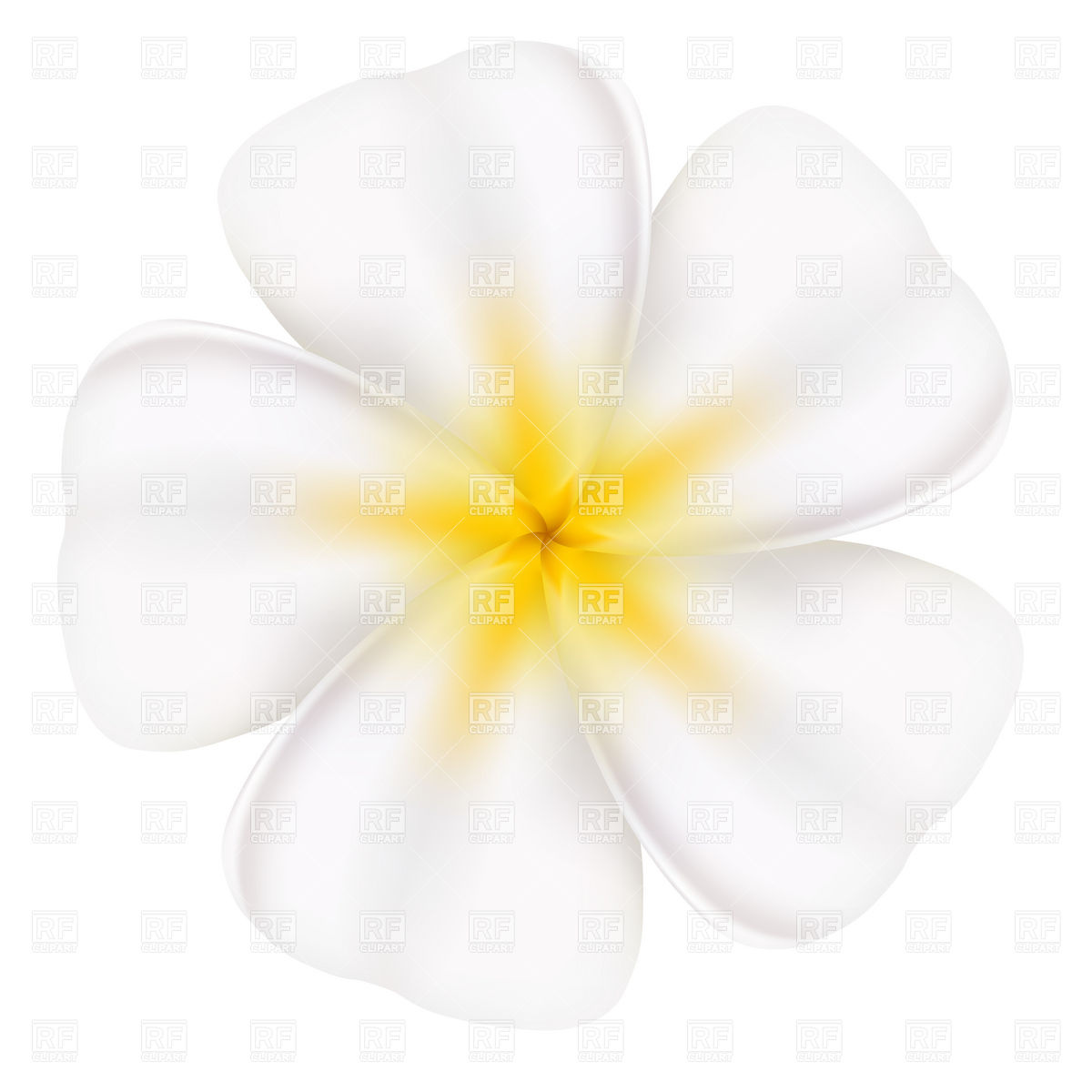 Frangipani Flower 7338 Download Royalty Free Vector Clipart  Eps