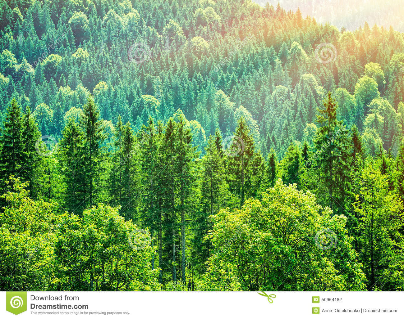Green Tree Forest Background Beautiful Bird Eye View On Fresh Pines