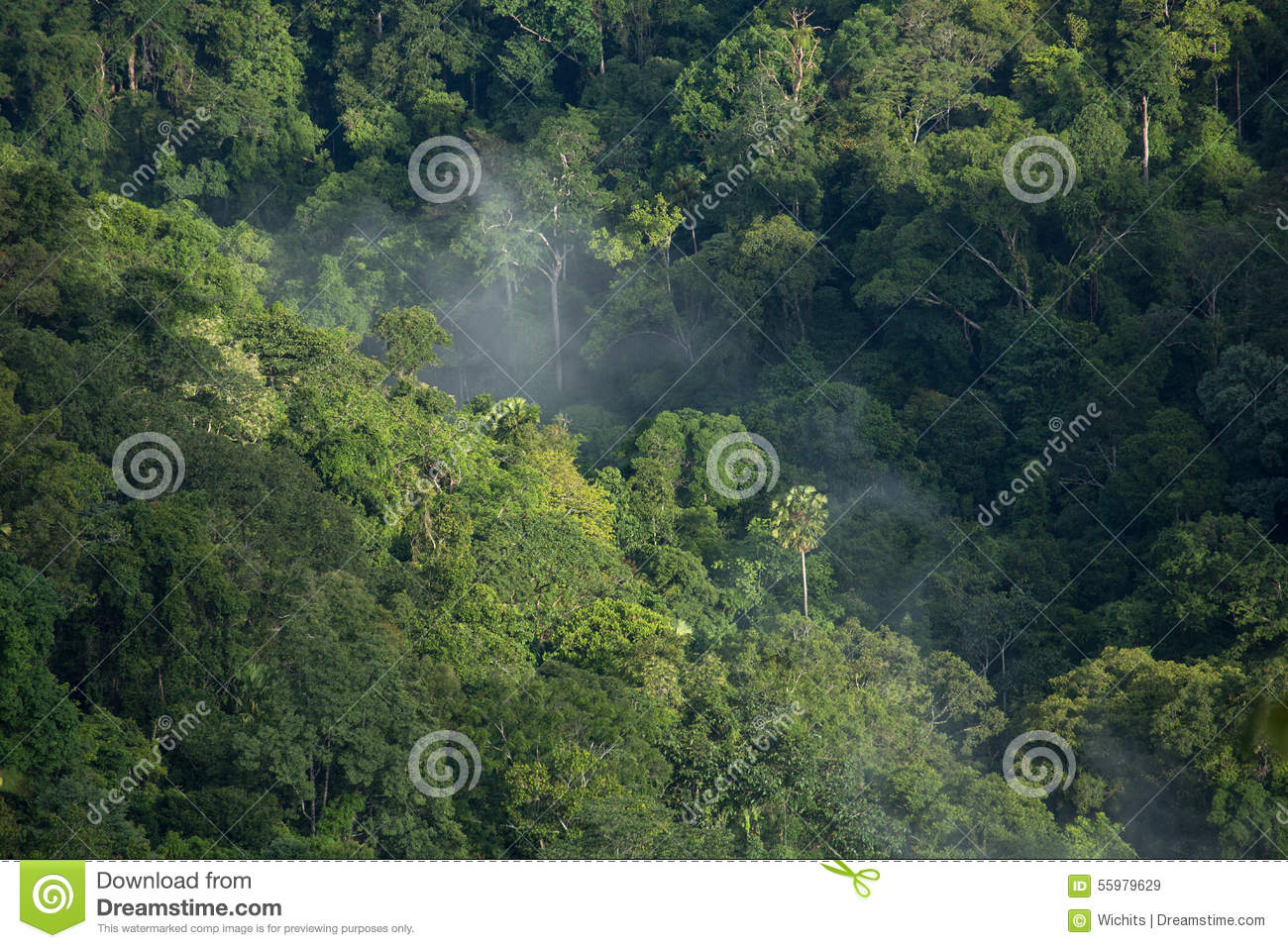 Tropical Rain Forest From Bird Eye View Khoyai Thailand