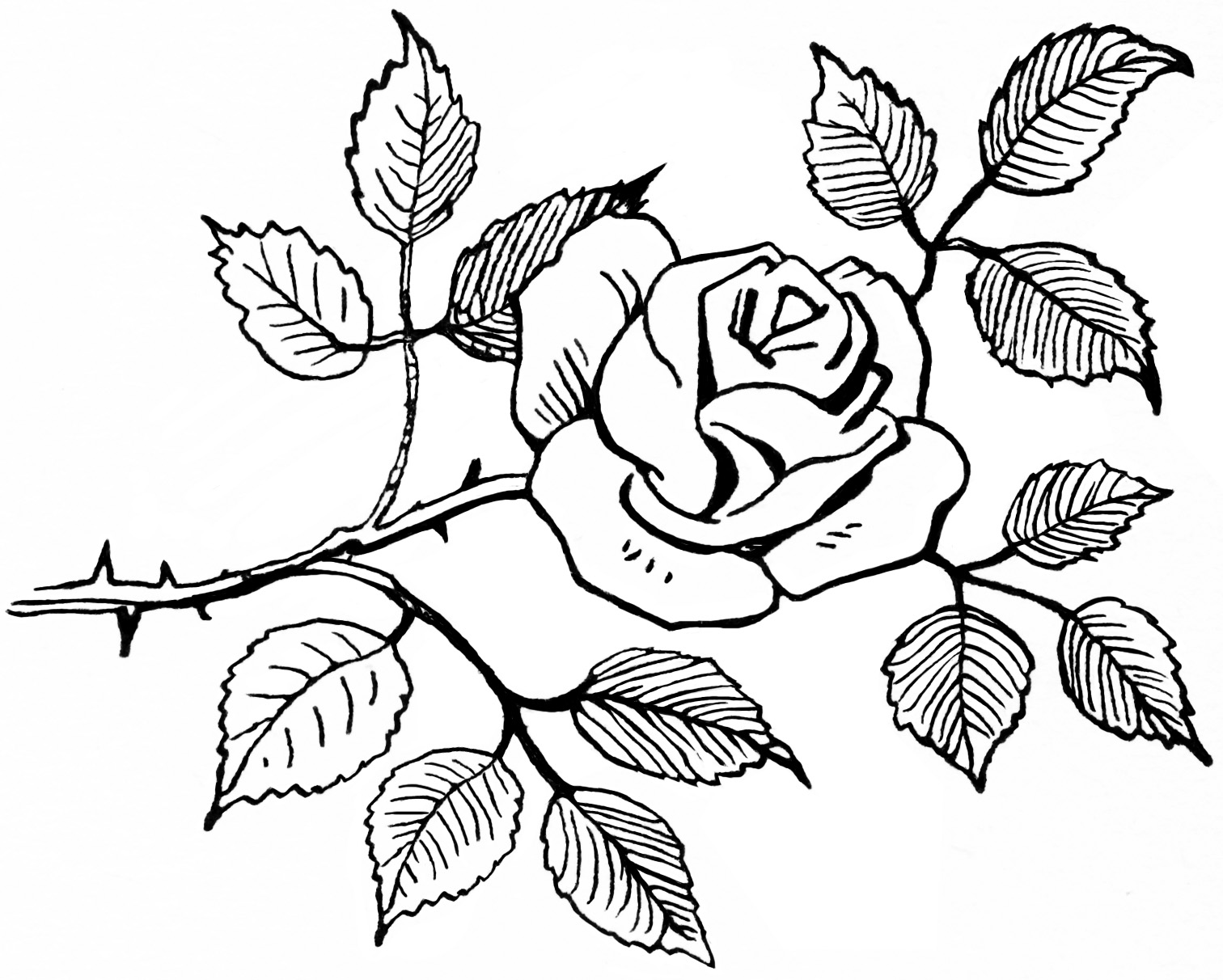 Clipart Flower Rose Sketch Digital Rose Graphic Flower Image