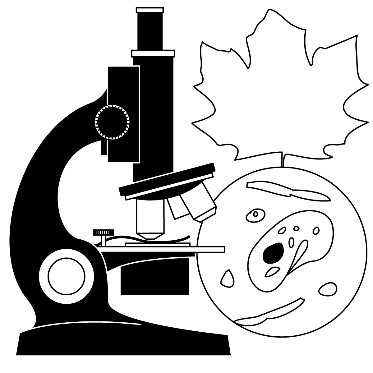 Science Clip Art   For Teachers Parents Students And The Classroom