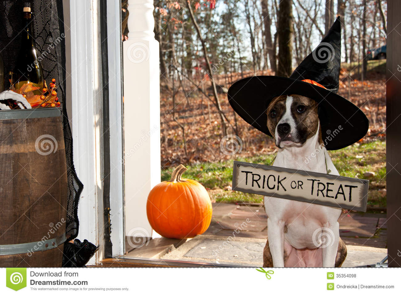Cute Dog Trick Or Treating Royalty Free Stock Photos   Image  35354098