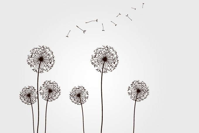 Dandelions With Flying Seeds Vector  Free    Free Vector Archive