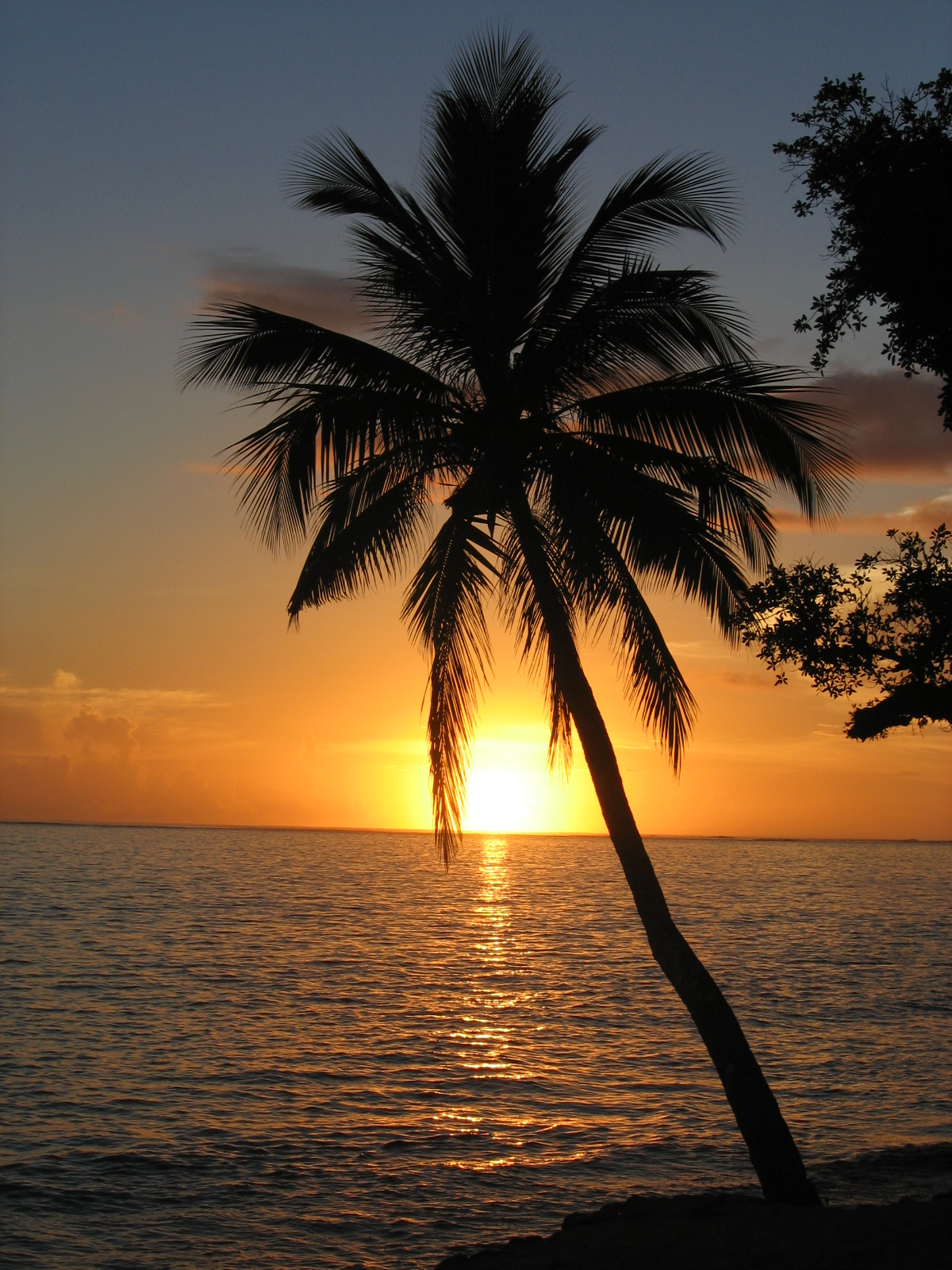 Palm Trees Beach Sunset Image Gallery
