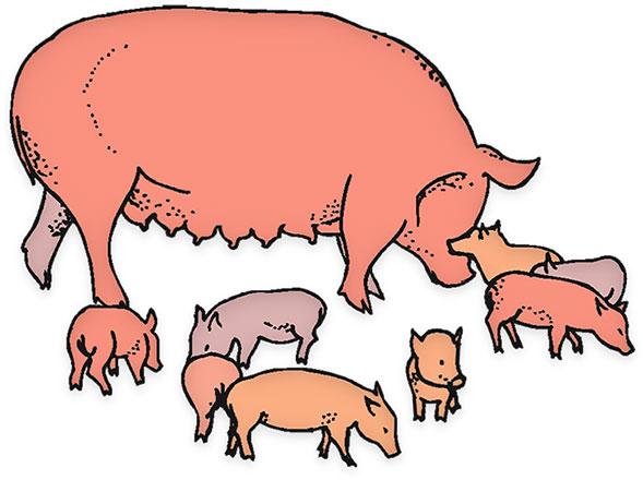 Farm Animal Gifs   Free Farm Animal Animations   Clipart