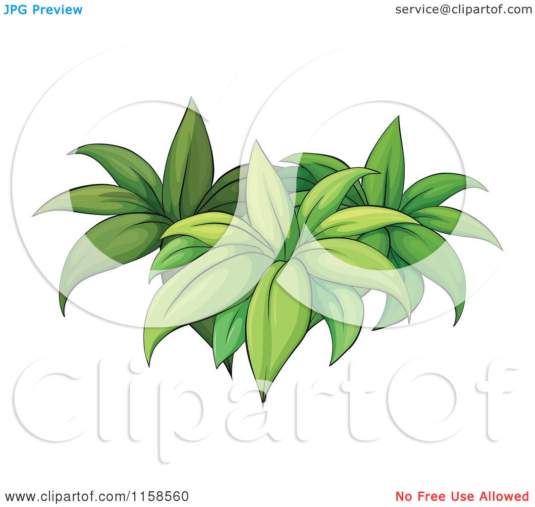 Jungle Plant Clip Art – Cliparts