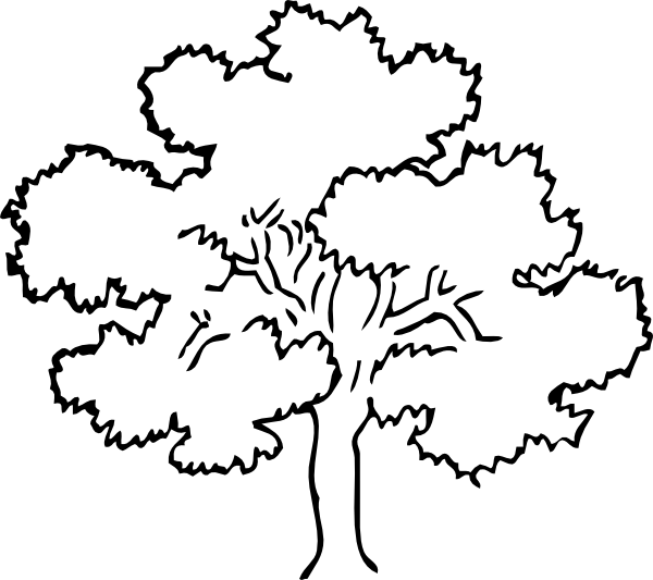 Oak Tree Clip Art At Clker Com   Vector Clip Art Online Royalty Free