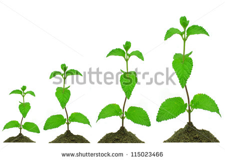 Crops Growing    342 X 594 70 1kb Corn Growing Clipart 1969 X 1969 451