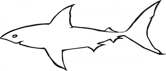 Shark Outline Clipart - Clipart Kid
