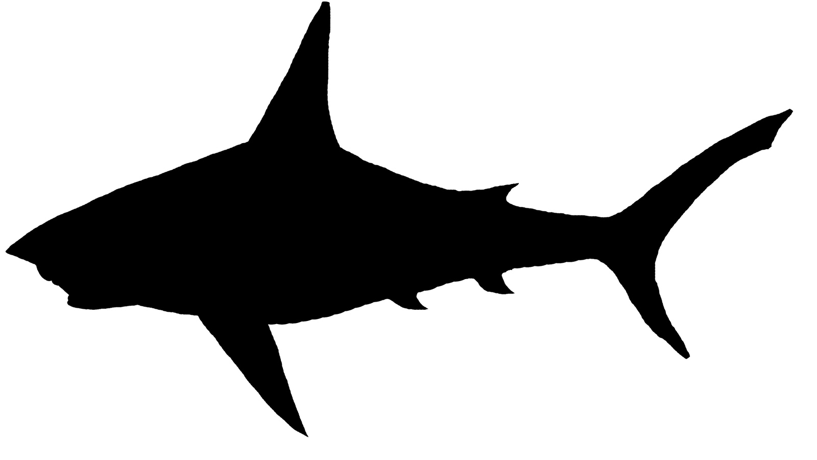 Shark Sil   Free Images At Clker Com   Vector Clip Art Online Royalty