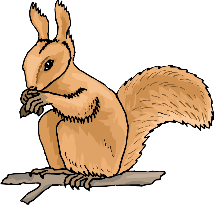 Animated Squirrel Clipart Free Squirrel Clipart